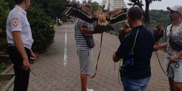 В Анапе у фотографов на улицах изъяли еще 5 орлов
