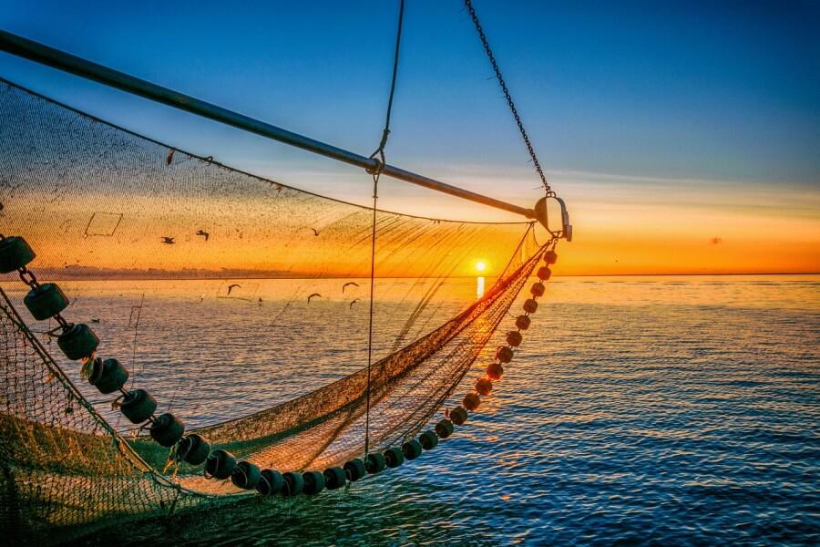 В Краснодарском крае до конца лета запретили вылов мидий и креветок