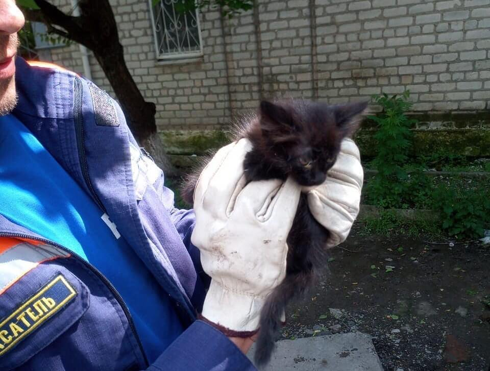 В Новороссийске любопытный котенок застрял в моторном отсеке автомобиля
