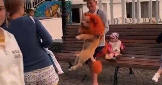 В Сочи фотографы раскрасили собак под львов, чтобы привлечь клиентов