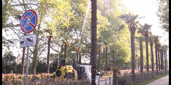В нацпарке Сочи деревья обработают химпрепаратами от насекомых-вредителей