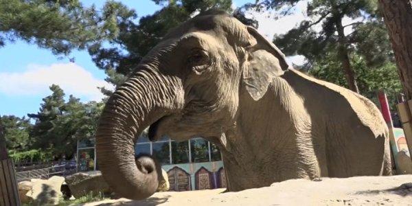 В Геленджике отметили День защиты слонов в зоопарках