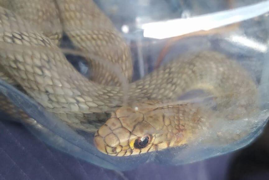 В Новороссийске змея заползла в ларек около пляжа