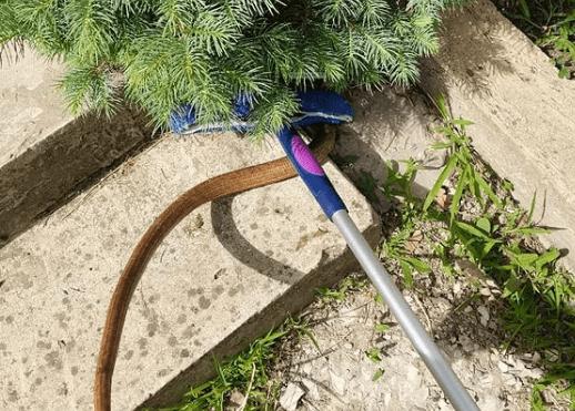 На Кубани змея заползла на елку во дворе частного дома, ее поймали спасатели