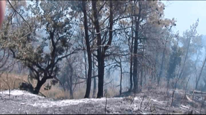 Виновники лесного пожара в Небуге заплатят почти 900 тыс. рублей