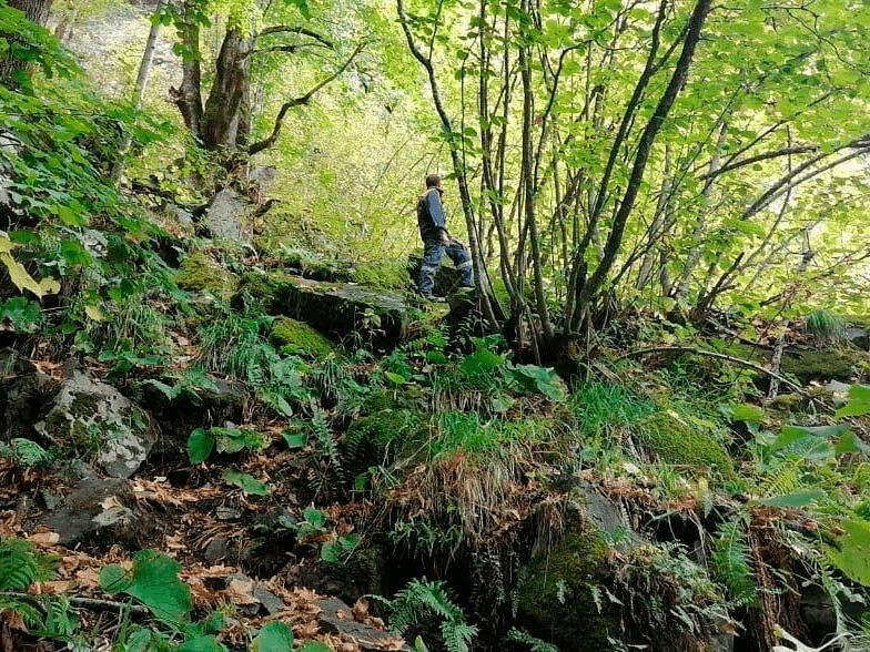 В горах Туапсинского района третий день продолжают искать пропавшего грибника
