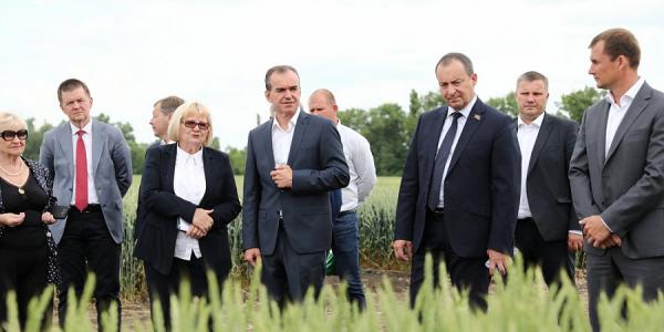 Кондратьев: наука и инновации позволяют развиваться сельскому хозяйству Кубани