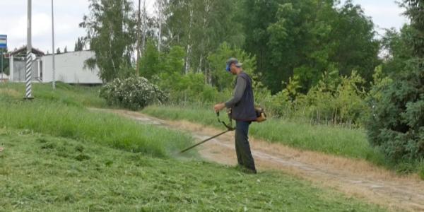 В Кореновском районе продолжается кампания по борьбе с амброзией