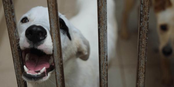 Мэрия Краснодара просит из бюджета 80 млн рублей на городской приют для животных