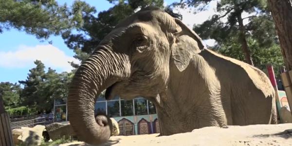В сафари-парке Геленджика отметили день защиты слонов