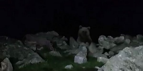 Кубанские туристы всю ночь отгоняли медведя от палаток. Видео