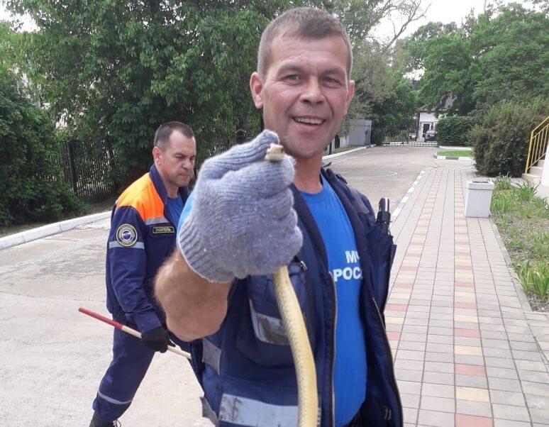 На Кубани змея заползла на территорию детского сада, ее поймали спасатели