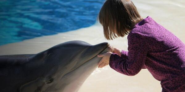 Дельфинотерапия: за или против?