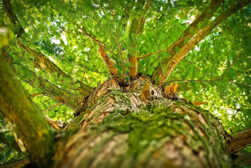 В Краснодаре пересчитают деревья