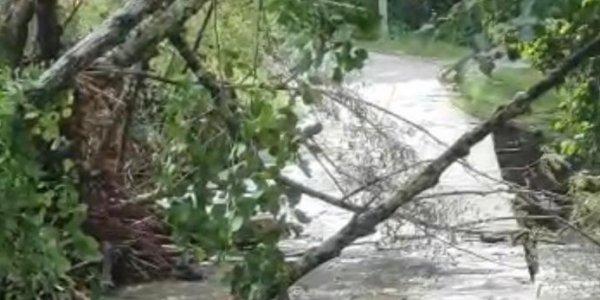 Прокуратура: в машине, которую в Сочи унесло рекой, было 5 человек