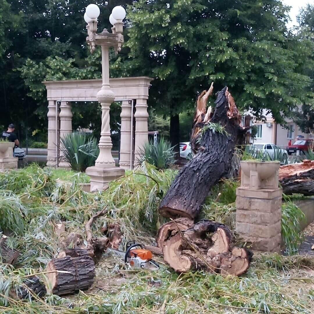 В Геленджике сильный ветер свалил два больших дерева и несколько увесистых веток