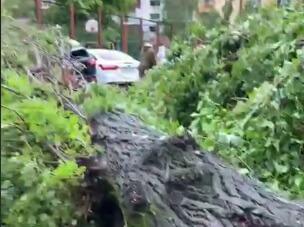 В Сочи упавшее из-за урагана дерево убило молодого мужчину