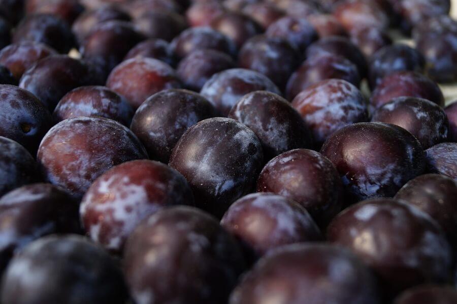 В порту Туапсе задержали более 19 т зараженных плодовой мухой турецких слив
