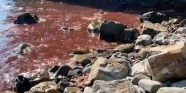 В Геленджике море у скалы Парус окрасилось в красный цвет. Видео
