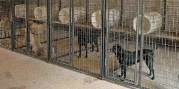 В Новороссийске планируют построить приют для 200 бездомных животных