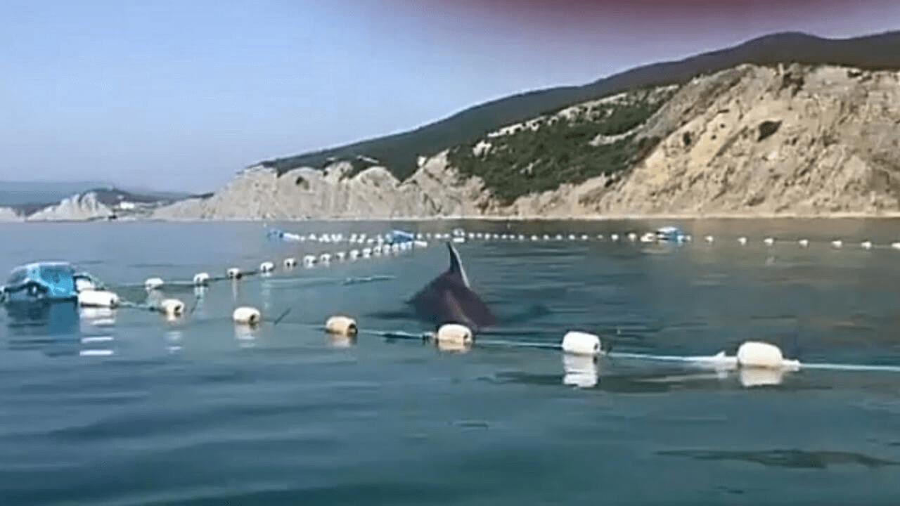 Полиция не нашла нарушений в поступке волонтеров, спасших дельфинов из сетей