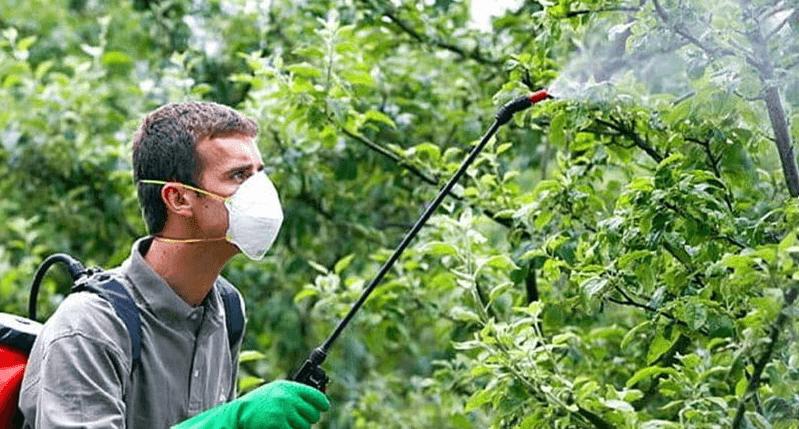 Абинских пчеловодов предупредили об обработках яблоневого сада химикатами