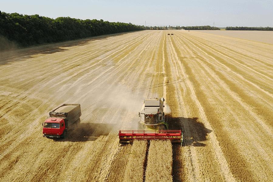 В Краснодарском крае собрали около 9,5 млн т зерновых и зернобобовых культур