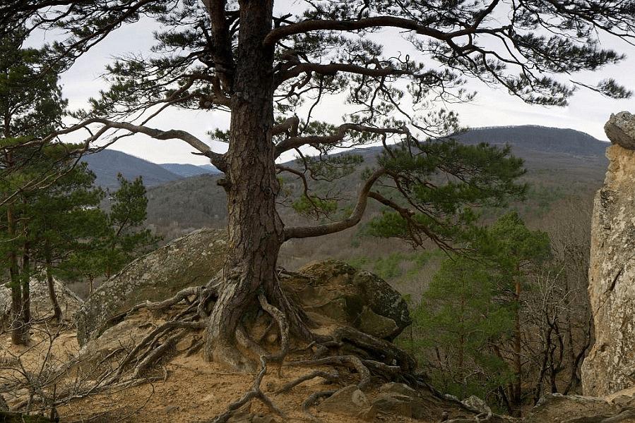 На Кубани в 2021 году восстановят около 50 га леса