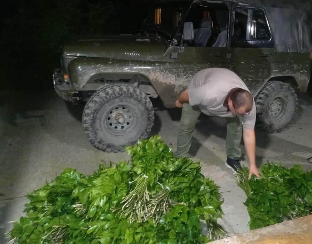 В Сочи двое мужчин собрали «букет» из краснокнижных растений за 5 млн рублей