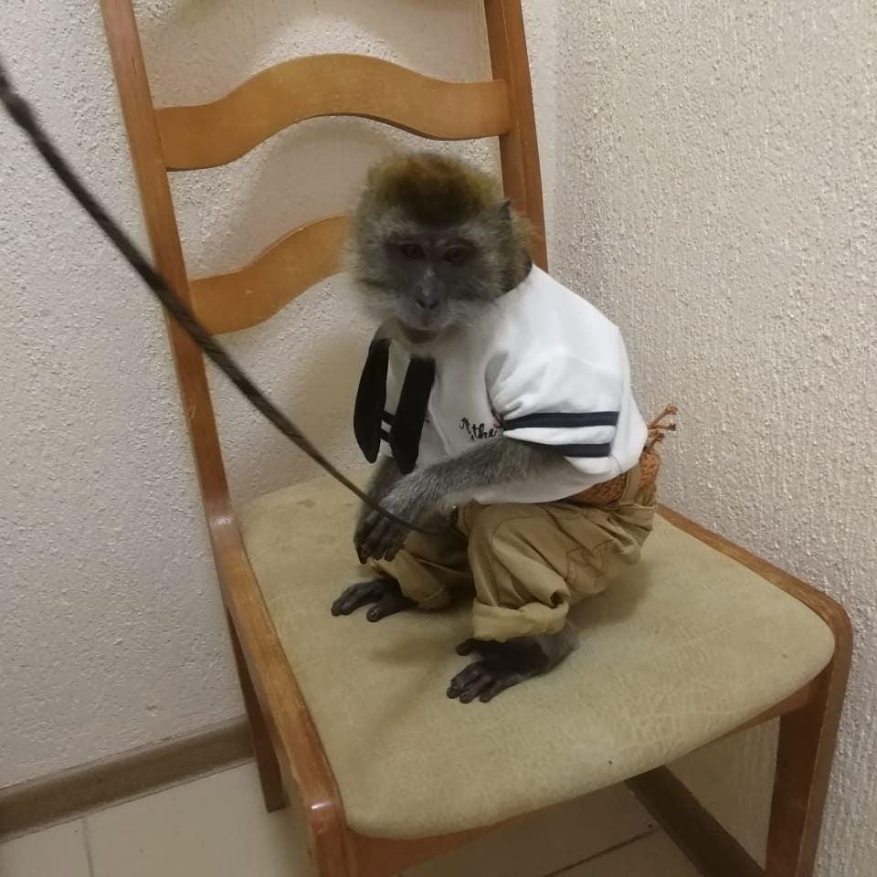 В Анапе полицейские забрали у уличных фотографов обезьяну и енота
