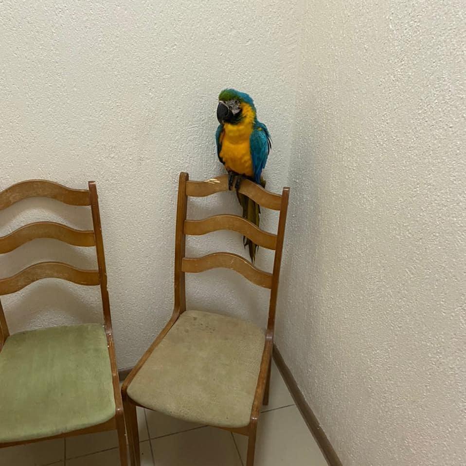 В Анапе полицейские забрали у уличного фотографа попугая ара