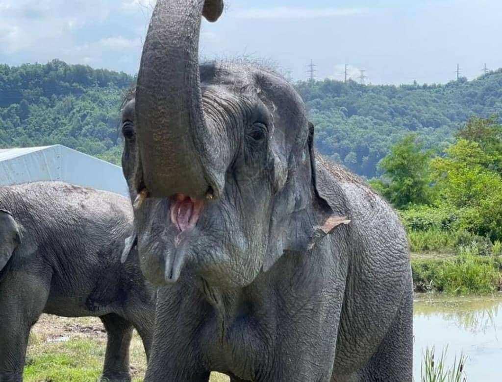 Информация о сочинском санатории для слонов оказалась не до конца достоверной