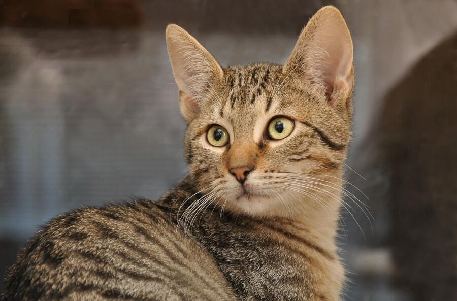 В Госдуме призвали губернаторов помогать волонтерским приютам для животных