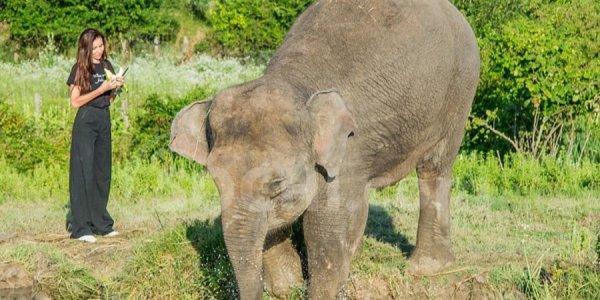 В Сочи открыли первый в России парк для отдыха слонов