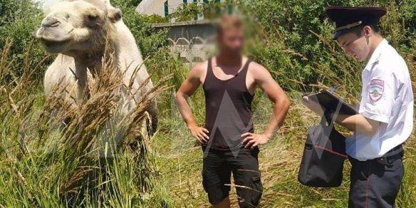 В Анапе оштрафовали пляжного фотографа с верблюдом