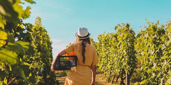 Сельская идиллия и ничего лишнего: пособие для туриста
