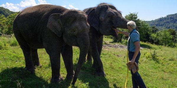 Как слоны отдыхают на передержке в Сочи. Фоторепортаж