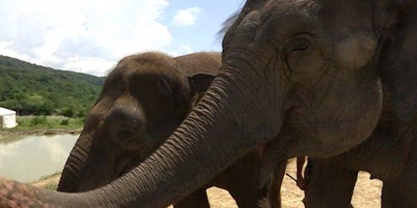В селе Ахштырь слоны отдохнули в специальном пансионе