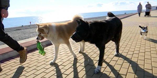 Гостившему на Кубани псу-экоактивисту Мурчику поставят памятник в Балашихе