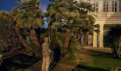 В Сочи 50 га территорий обработали от вредителей, завезенных перед Олимпиадой