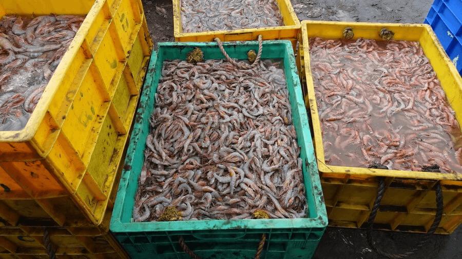 На Кубани браконьер заплатит 1,2 млн рублей за незаконный вылов креветки