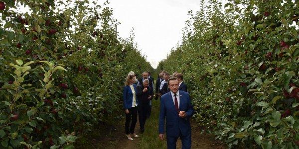 На Кубани 46 фермеров получили 138 млн рублей на закладку садов