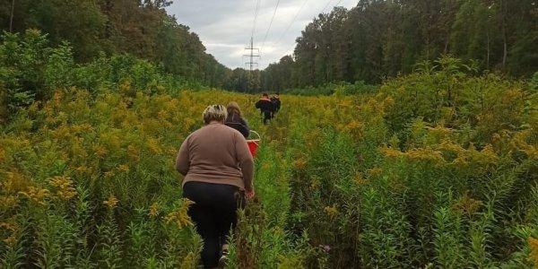 В Белореченском районе две женщины отправились за грибами в лес и заблудились