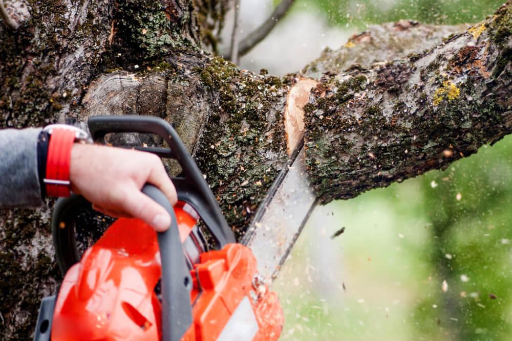 В Краснодаре подготовили рекомендации по обрезке деревьев