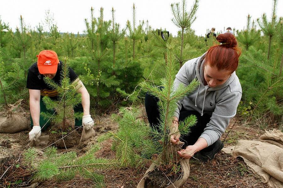 В лесах Кубани на 92% выполнили агротехнические работы по нацпроекту «Экология»