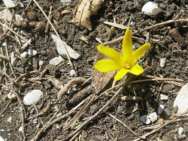 Специалисты РГО нашли на горе Шизе редчайший краснокнижный цветок