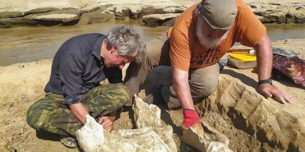 В Белореченске на берегу реки нашли окаменелости слона