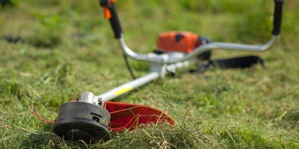 В Краснодаре более 6 тыс. га территорий освободили от амброзии