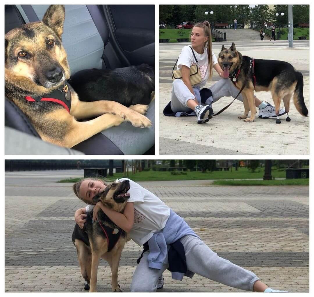 В Томске двум бездомным собакам из Краснодарского края поставили протезы