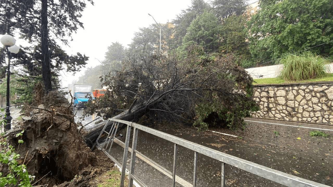 Упавшее дерево парализовало движение транспорта на федеральной дороге в Сочи